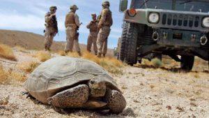 Marine tortoise